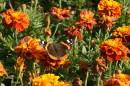 Taksony, tulipany i żarłoczne ryby, czyli  Łódzki Ogród Botaniczny