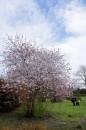 Wiosna w Botaniku