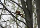 """Wiewiórka """"ogrodowa botaniczna"""""""