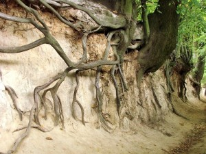 Odkrywanie pomników przyrody. Korzeniowy Dół