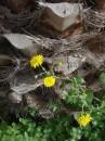 Na skalistym wybrzeżu pierwsze oznaki wiosny