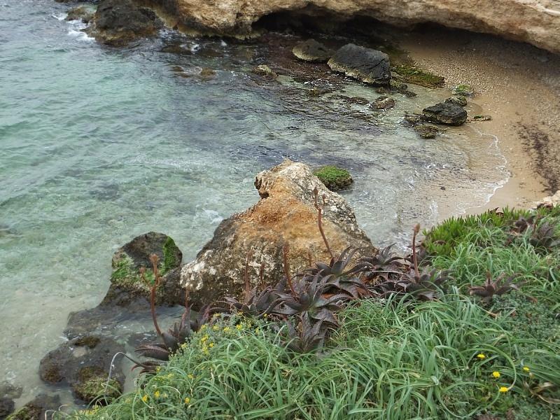 Malownicza linia brzegowa w Sant Antoni de Portmany