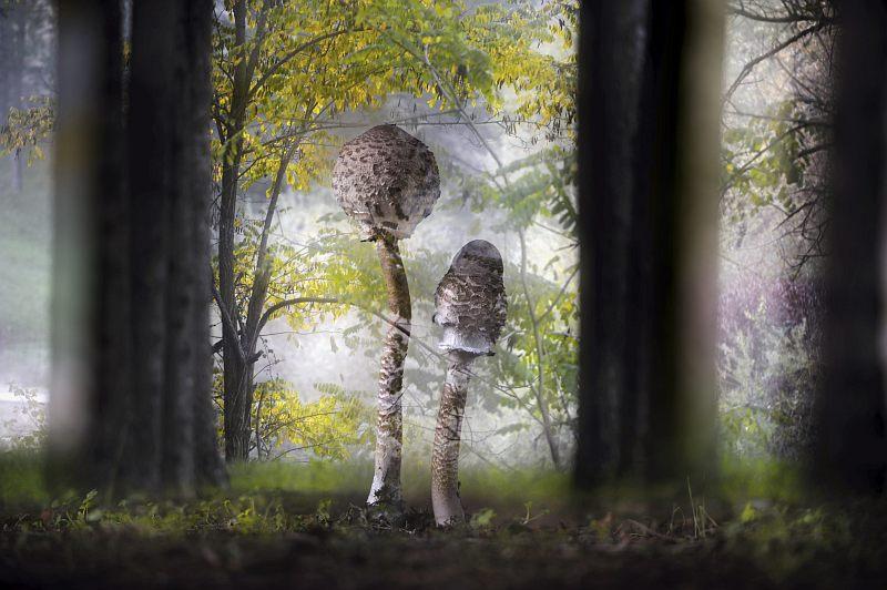 Fotografia Dzikiej Przyrody 2013 – wystawa w Muzeum Miejskim Wrocławia