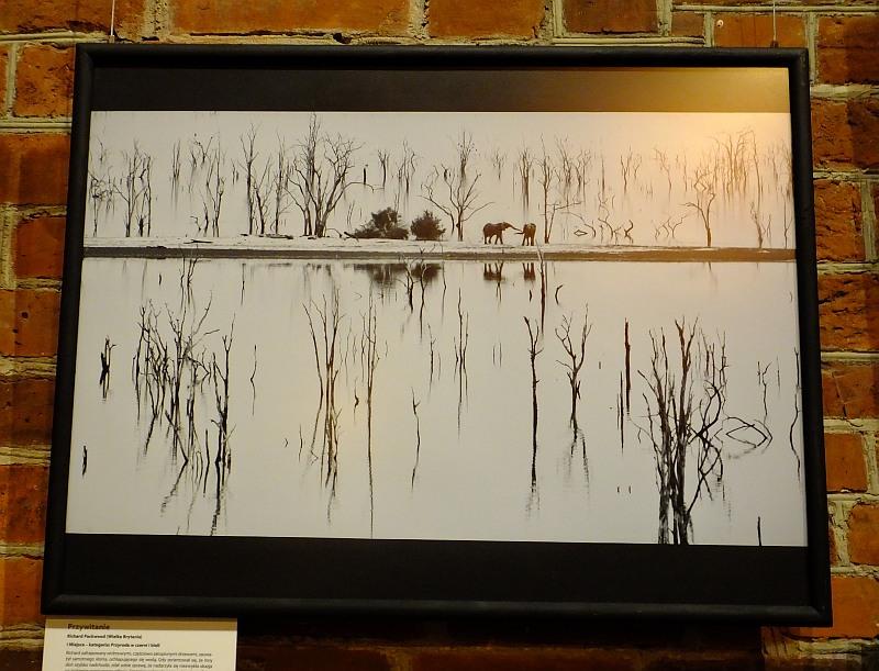 Najlepsze fotografie dzikiej przyrody w Starym Ratuszu