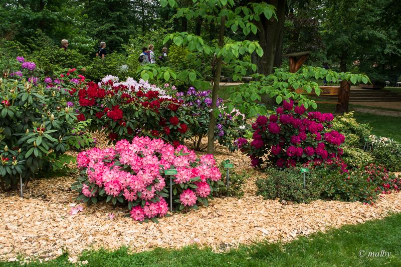 Ogród Różany w niemieckim Forst