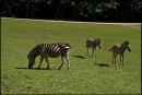 Dvur Kralove - ZOO-Safari