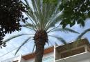Wysokie palmy sprawdzają się w roli słupów energetycznych
