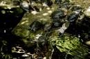 Żółwie mieszkające w Palmiarni