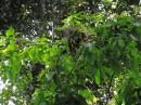 ManausV0570