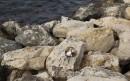 Na skałach wygrzewają się w słońcu  koty