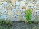 Nawet ogrodzenie może być dziełem sztuki